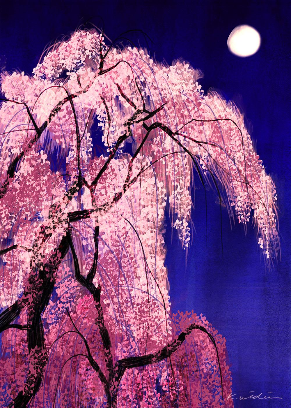 イラストレーション 風景 夜 桜 月