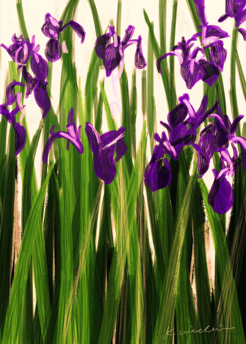 イラストレーション 風景 花 かきつばた 杜若